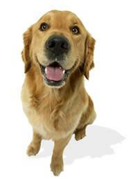 seguro mascota mapfre